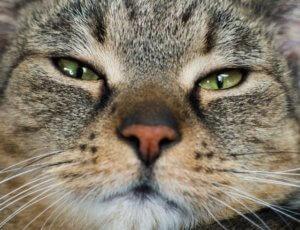 嫌な顔ネコ